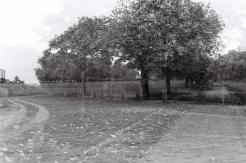20121108-215459.jpg